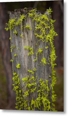 Bright Green Lace Metal Print by Omaste Witkowski