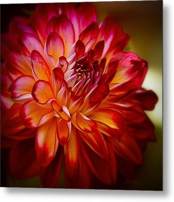 Brittany Red Dahlia Metal Print by Julie Palencia