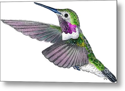 Broad-tailed Hummingbird Metal Print by Roger Hall