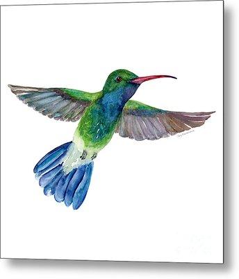 Broadbilled Fan Tail Hummingbird Metal Print by Amy Kirkpatrick