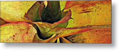 Bromeliad 24 Metal Print by Scott Parker