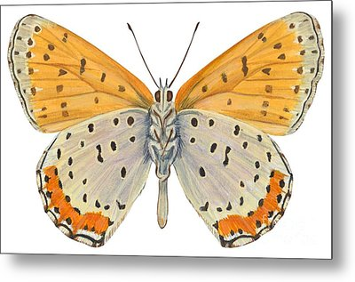 Bronze Copper Butterfly Metal Print by Anonymous