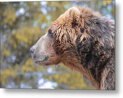 Brown Bear Smile Metal Print by Dan Sproul