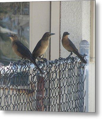 Brown Birds At Fernandina Beach Metal Print by Cathy Lindsey