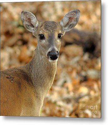 Brown-eyed Girl Metal Print by Robert Frederick