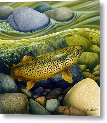 Brown Trout Metal Print by Jon Q Wright