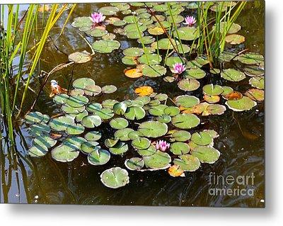 Bruges Lily Pond Metal Print by Carol Groenen