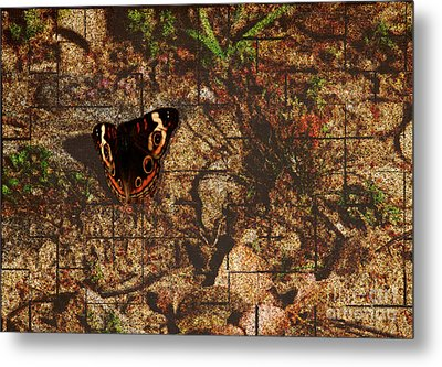 Buckeye Butterfly Metal Print by Amanda Collins