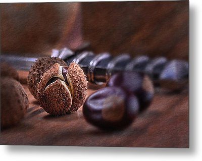Buckeye Nut Still Life Metal Print by Tom Mc Nemar