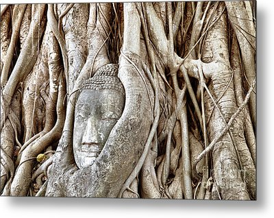 Buddha Head In Tree Wat Mahathat Ayutthaya  Thailand Metal Print by Fototrav Print