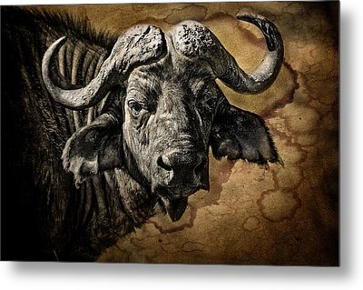 Buffalo Portrait Metal Print by Mike Gaudaur