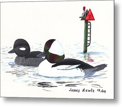Bufflehead Pair On A Calm Afternoon Metal Print by James Lewis