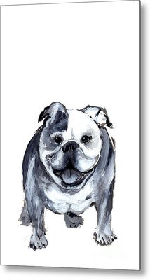 Bulldog  Metal Print by Barbara Marcus