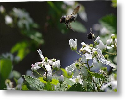 Bumble Bees In Flilght Metal Print by Tannis  Baldwin