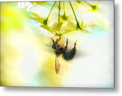 Bumble Going In For The Nectar Metal Print by Dan Friend