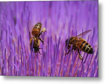 Busy Bees Metal Print by Kelly Jones