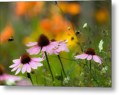 Busy Morning Metal Print by Mary Amerman
