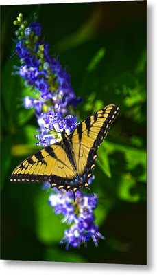 Butterflly Bush And The Swallowtail Metal Print by Sandi OReilly