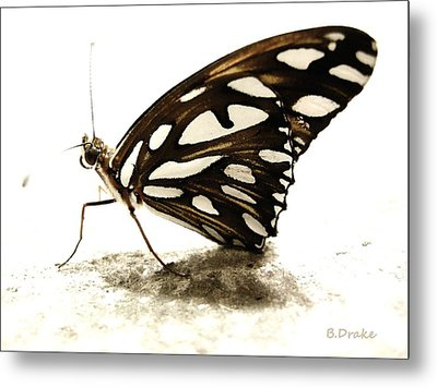 Butterfly Afterlife Metal Print by Barbara Drake