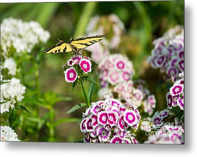 Butterfly And Bloom - Beautiful Spring Flowers And Tiger Swallowtail Butterfly. Metal Print by Jamie Pham