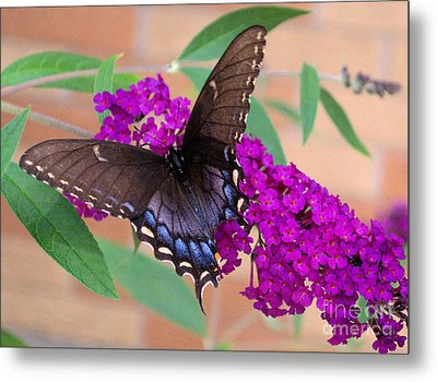 Butterfly And Friend Metal Print by Luther   Fine Art