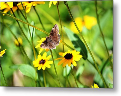 Butterfly And Yellow Flowers Metal Print by Carlee Ojeda