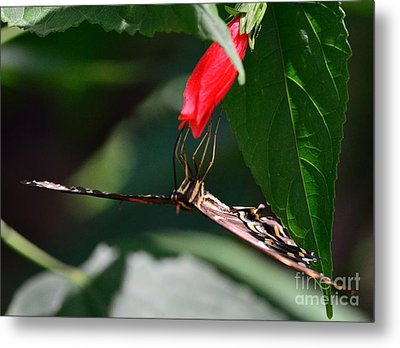 Butterfly Black Swallowtail With Leading Edge Palamedes Metal Print by Wayne Nielsen