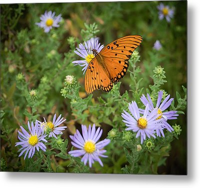 Butterfly Garden Metal Print by James Barber