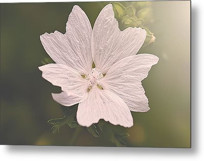Butterfly Petals Metal Print by Faith Simbeck