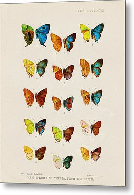 Butterfly Plate Metal Print by Pati Photography