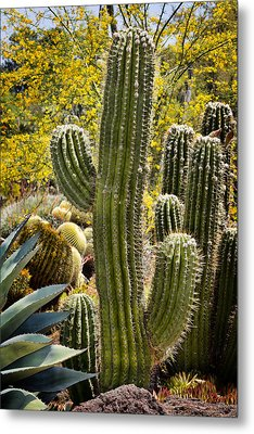 Cacti Habitat Metal Print by Kelley King