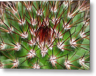 Cactus Facheiroa Ulei Abstract Metal Print by Nigel Downer