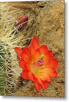 Cactus Flower Bright Metal Print by Feva  Fotos