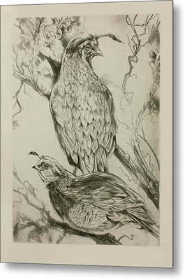 California Quails Lithograph Metal Print by Derrick Higgins