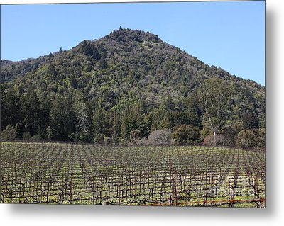 California Vineyards In Late Winter Just Before The Bloom 5d22142 Metal Print by Wingsdomain Art and Photography