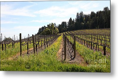 California Vineyards In Late Winter Just Before The Bloom 5d22167 Metal Print by Wingsdomain Art and Photography