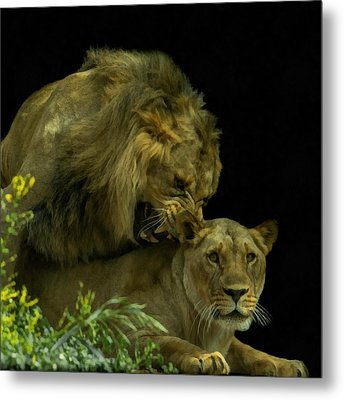 Call Of The Wild 2 Metal Print by Ernie Echols