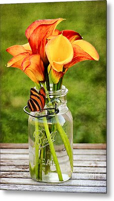 Calla's And The Butterfly Metal Print by Darren Fisher