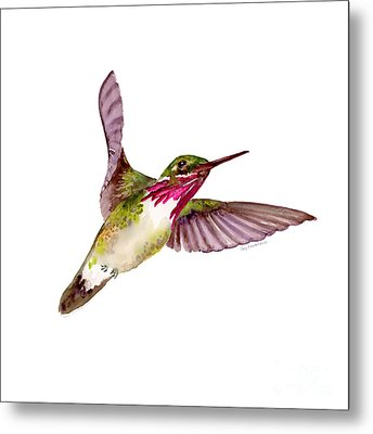 Calliope Hummingbird Metal Print by Amy Kirkpatrick