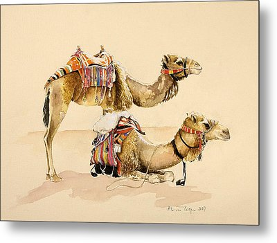 Camels From Petra Metal Print by Alison Cooper