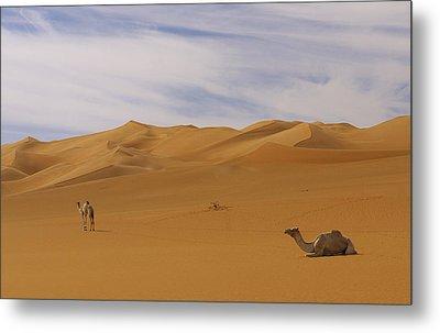 Camels Metal Print by Ivan Slosar