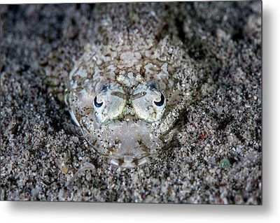 Camouflaged Flathead Fish Metal Print by Ethan Daniels