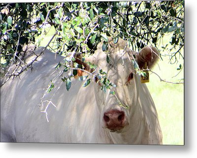 Can You See Me Now? Metal Print by Dorothy Menera