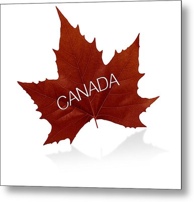Canadian Maple Leaf Metal Print by Aged Pixel