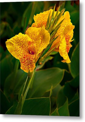 Canna Blossom Metal Print by Mary Jo Allen