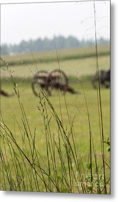 Canon In The Weeds Metal Print by Dwight Cook