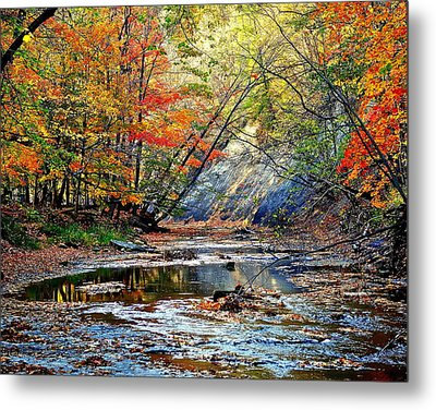 Canopy Of Color Iv Metal Print by Frozen in Time Fine Art Photography