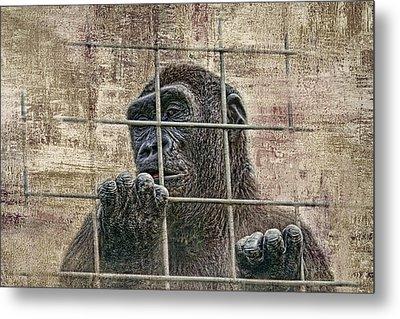 Captivity Metal Print by Tom Mc Nemar