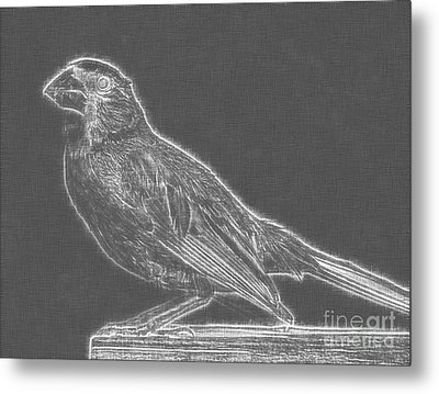 Cardinal Bird Glowing Charcoal Sketch Metal Print by Celestial Images