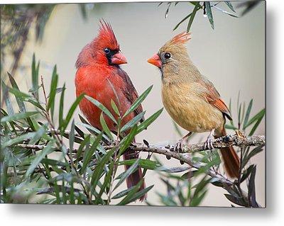 Cardinal Mates Metal Print by Bonnie Barry